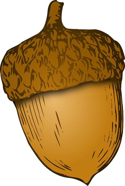 Les noix de pécan : propriétés et avantages d'en consommer